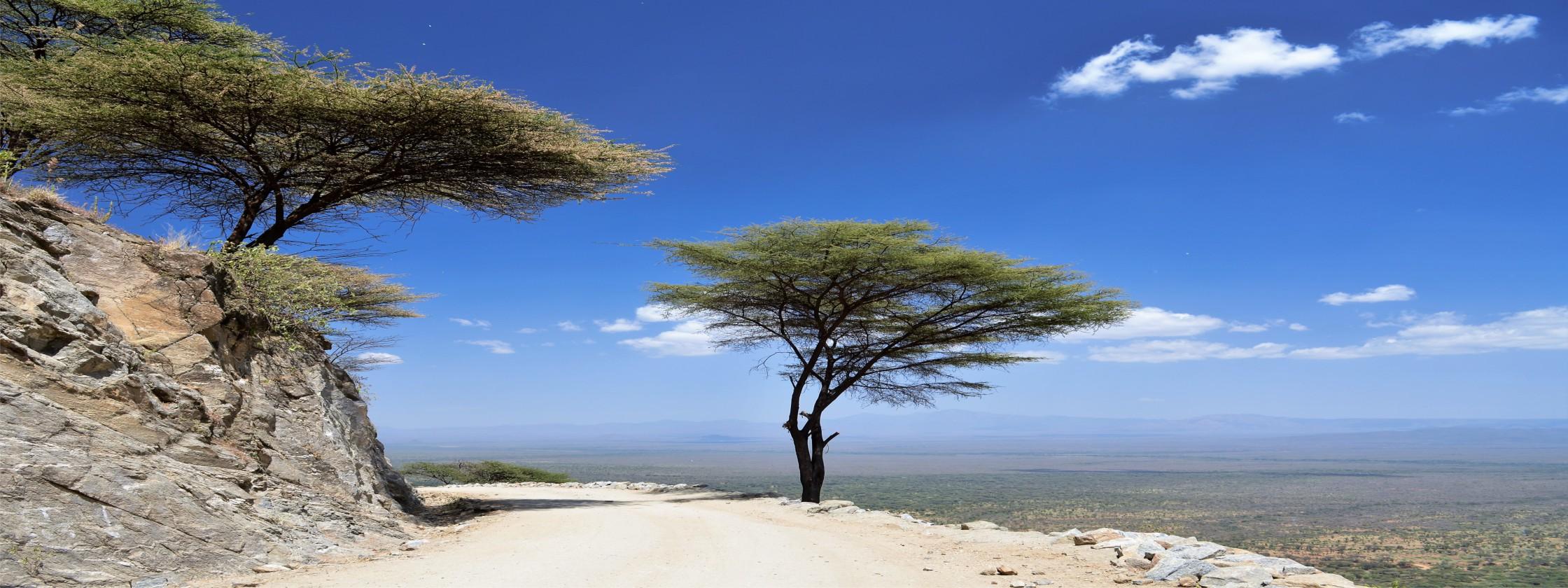 1R Tree on escarp str web